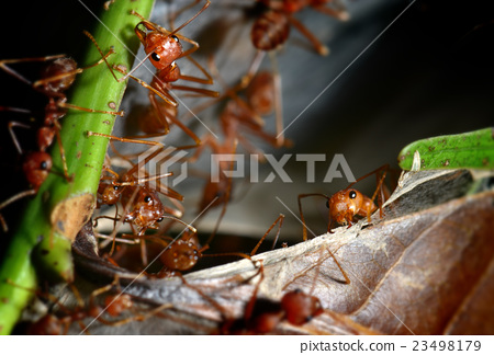 The ants in the nature 23498179