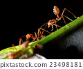The ants in the nature 23498181