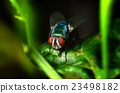 A fly on the leaf in nature 23498182
