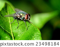 A fly on the leaf in nature 23498184