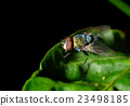 A fly on the leaf in nature 23498185