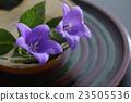 도라지와 오리베 여름 그릇 23505536