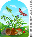 vector summer illustration  insect 2 23506435