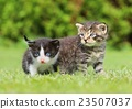 cat, kitten, adorable 23507037