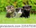 猫 猫咪 小猫 23507038