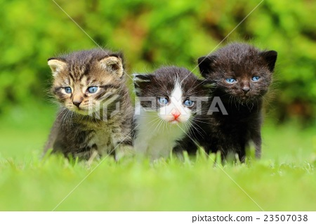 Three cute kittens 23507038
