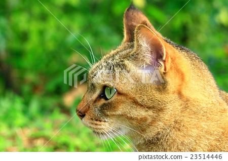 動物,護理,貓,戶外,生物有機體 23514446