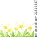 蒲公英 水彩畫 花朵 23516487