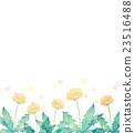 蒲公英 水彩畫 花朵 23516488