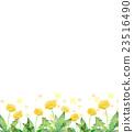 蒲公英 水彩畫 花朵 23516490