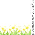 蒲公英 水彩畫 花朵 23516491