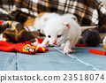 White Newborn kitten in a plaid blanket 23518074