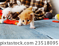 Red orange newborn kitten in a plaid blanket 23518095