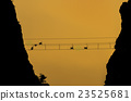Silhouette of monkeys on the rope bridge at sunset time 23525681