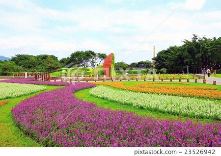 植物,花卉,生態,美麗,風景 23526942