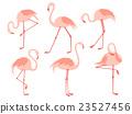 火烈鳥 鳥兒 鳥 23527456