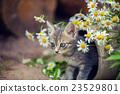 Portrait of little kitten with flowers 23529801