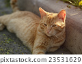red homeless cat resting on sidewalk 23531629