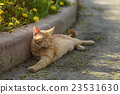 red homeless cat resting on sidewalk 23531630