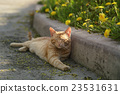 red homeless cat resting on sidewalk 23531631
