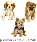 微型柴犬 叢林犬 狗 23532581