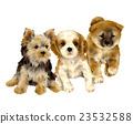 微型柴犬 叢林犬 狗 23532588