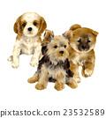 微型柴犬 叢林犬 狗 23532589