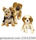 微型柴犬 叢林犬 狗 23532590