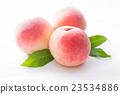 桃子 水果 白桃 23534886