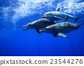 海豚 东方宽吻海豚 海底的 23544276