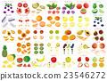 vectors, vector, cut fruit 23546272