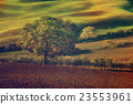 Tuscan fields and trees 23553961