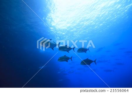 Flock of Nanyi 23556064
