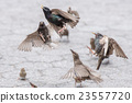 Birds fighting for food close up detail 23557720