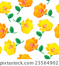 Yellow Hibiscus  23564902