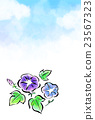 japanese morning glory, clouds, cloud 23567323