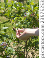 藍莓 水果 手 23575253