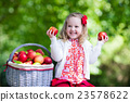 Little girl with apple basket 23578622