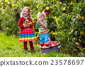 Kids picking apples in fruit garden 23578697