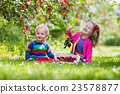 Kids picking cherry on a fruit farm 23578877