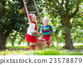 Kids picking cherry on a fruit farm 23578879