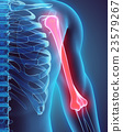 3D illustration of Humerus, medical concept. 23579267