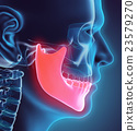 3D illustration of Mandible, medical concept. 23579270