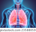 3D illustration of Lungs, medical concept. 23588059