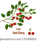 Green branch with red cherries. 23588082