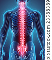 3D illustration of Spine, medical concept. 23588389