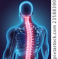 3D illustration of Spine, medical concept. 23588390