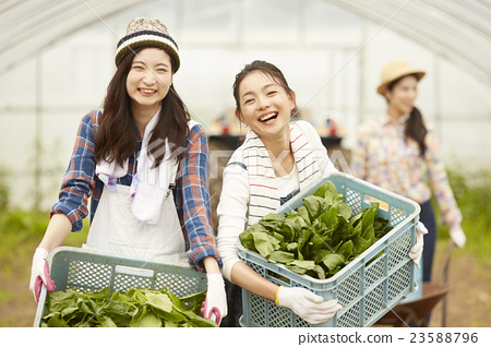 Girls working in agriculture landscape 23588796