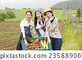 肖像 蔬菜 農事 23588906