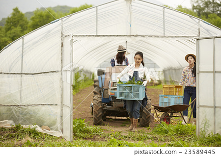 Girls working in agriculture landscape 23589445
